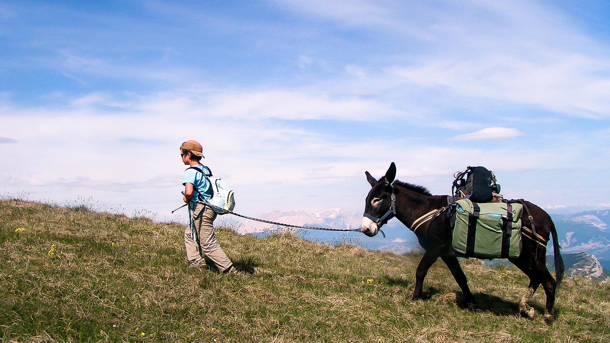 Randonnée avec des ânes sur les Hauts-Plateaux du Vercors, un cadre idéal pour toute la famille !