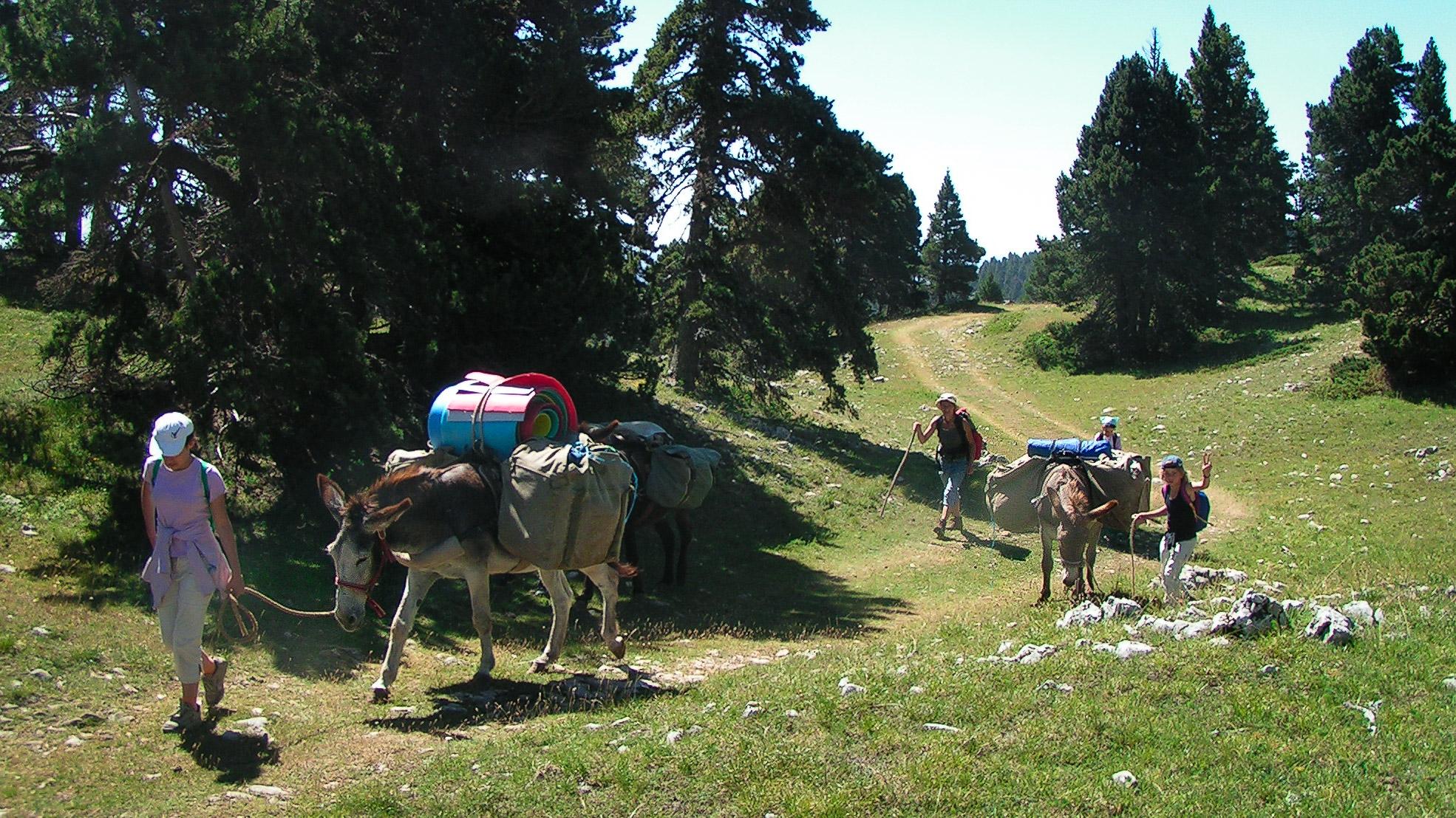 la caravane des ânes en marche