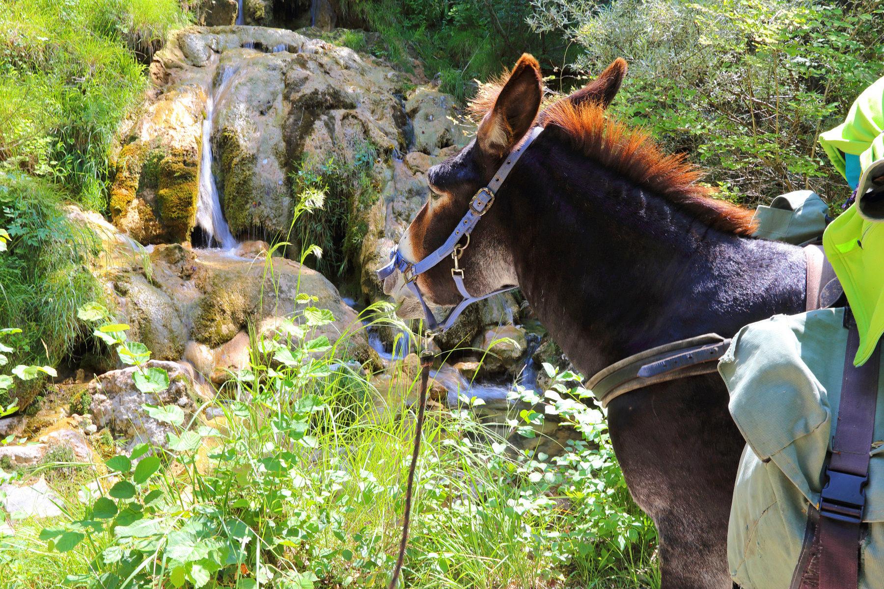 Un âne observe la cascade