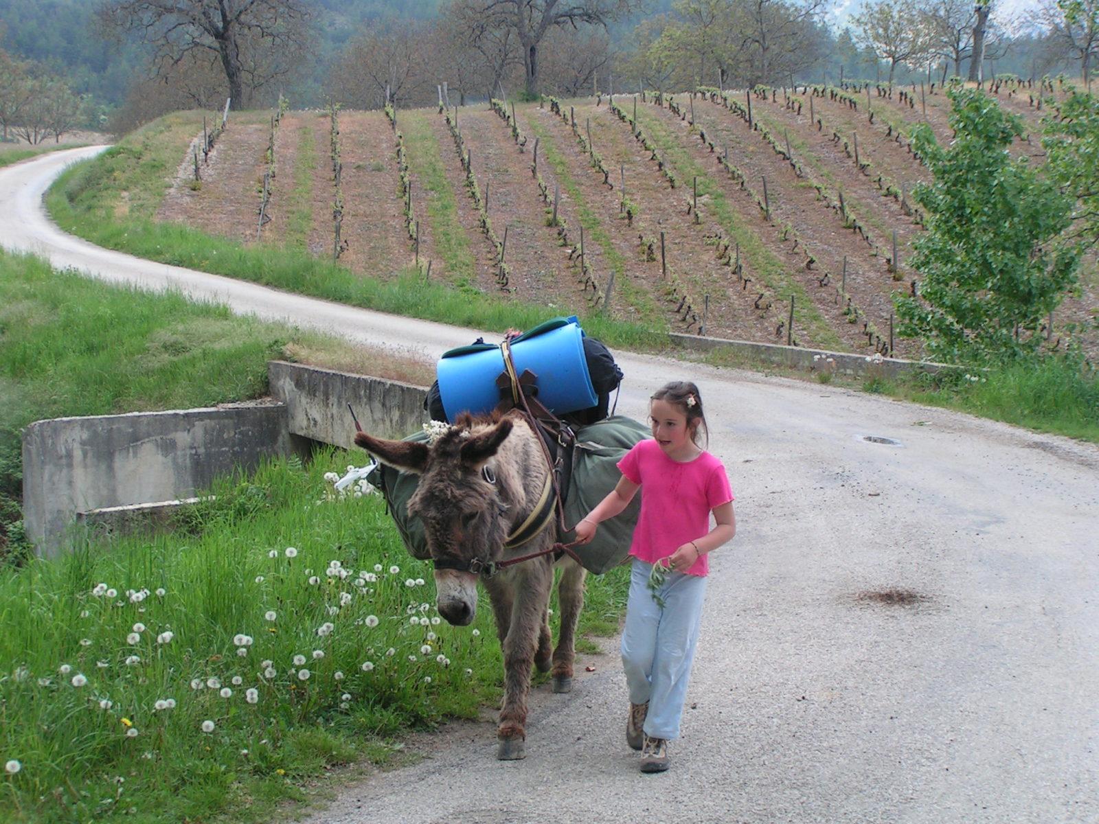 Avec un âne dans les vignes