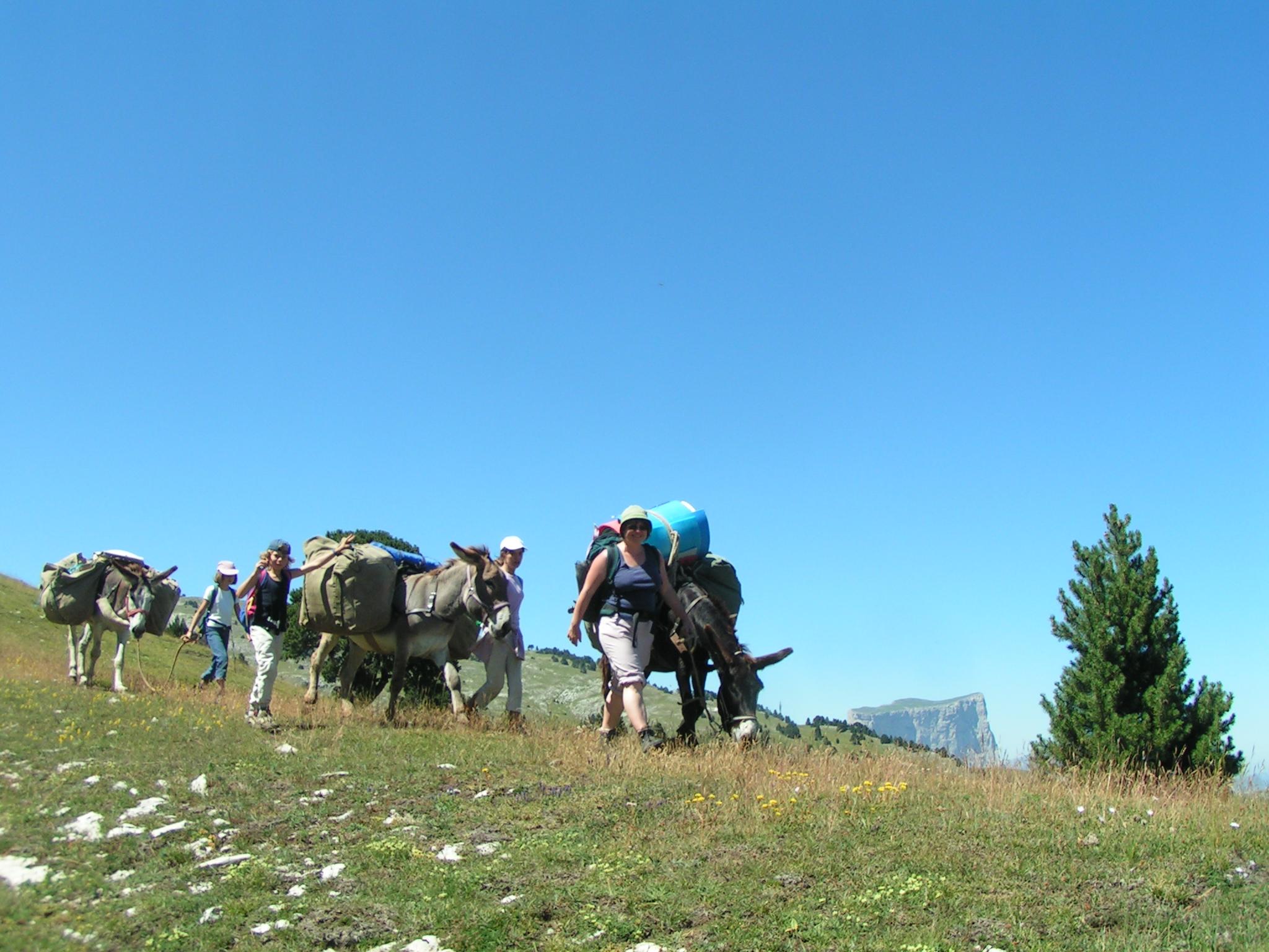 Sur les crêtes de Combeau, randonnée avec des ânes