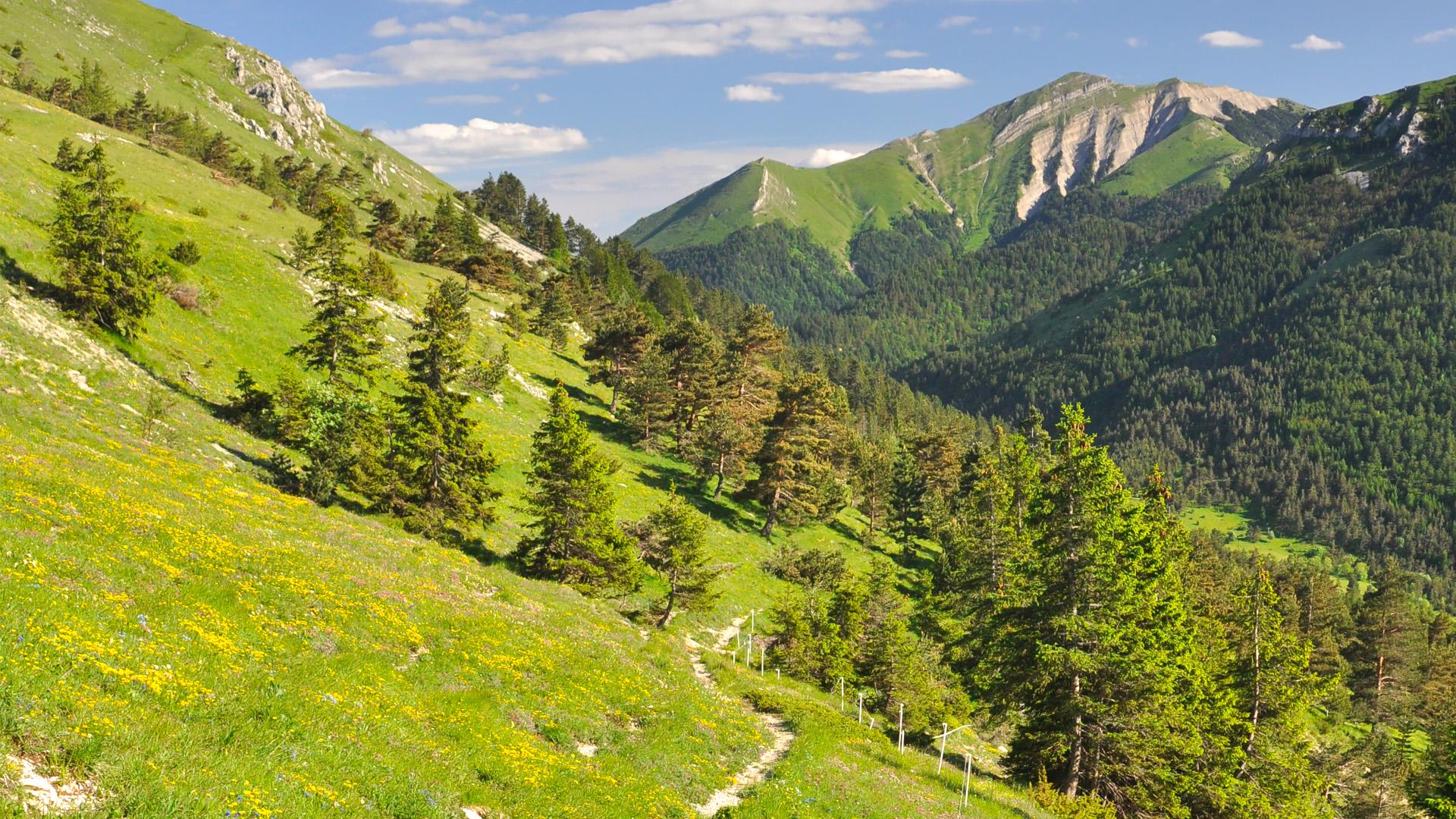 Le Mont Jocou, belvédère sur le Mont AIguille !
