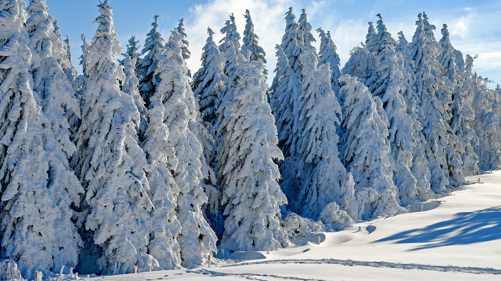 Sapins givrés en Haute Forêt Noire