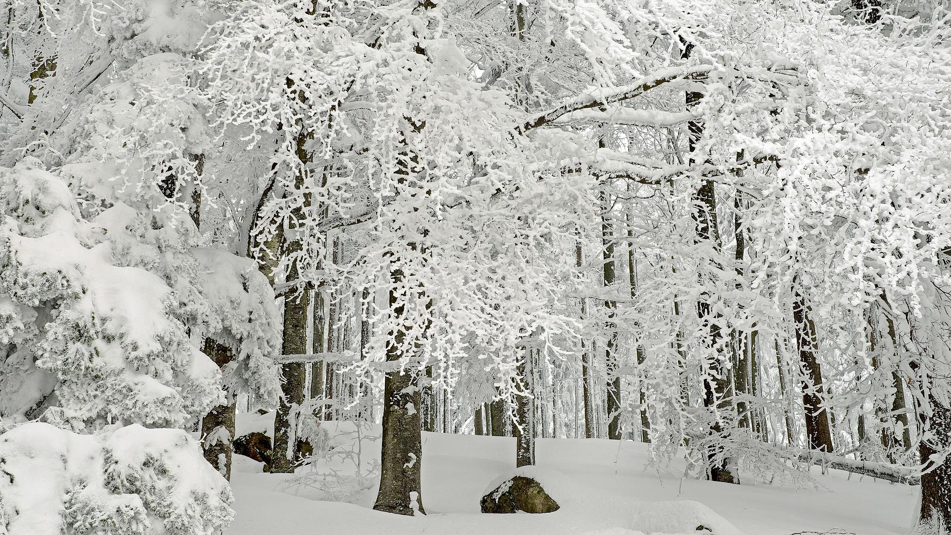 Forêt givrée