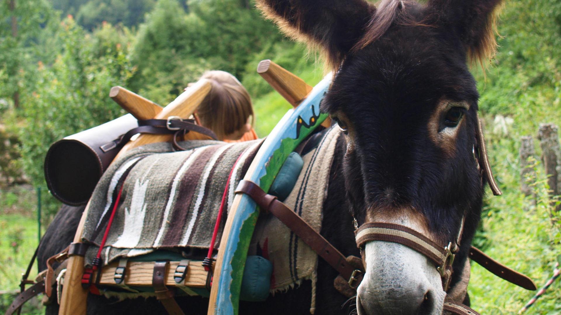 Nos adorables compagnons les ânes...