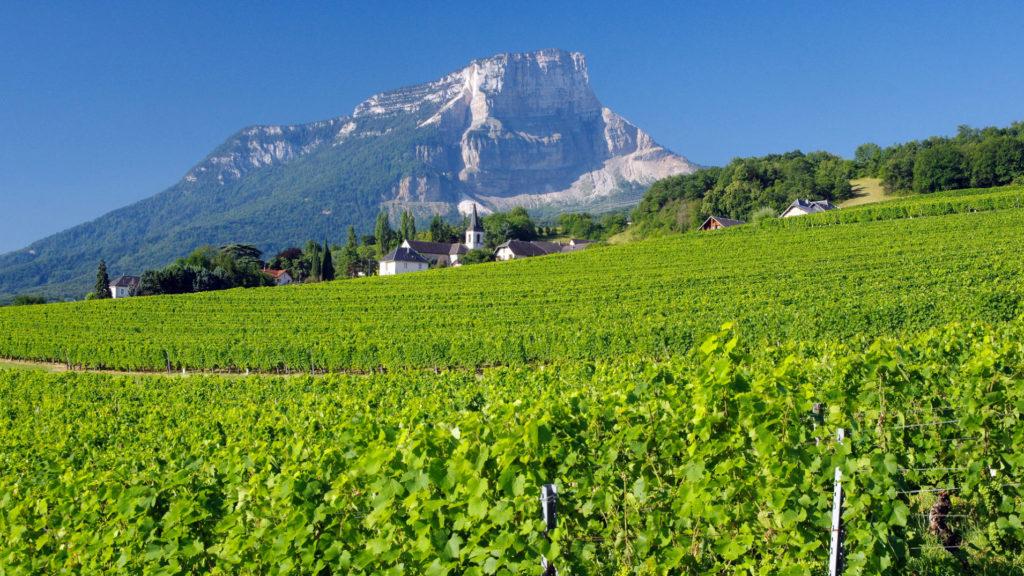 Dans les vignobles de Savoie