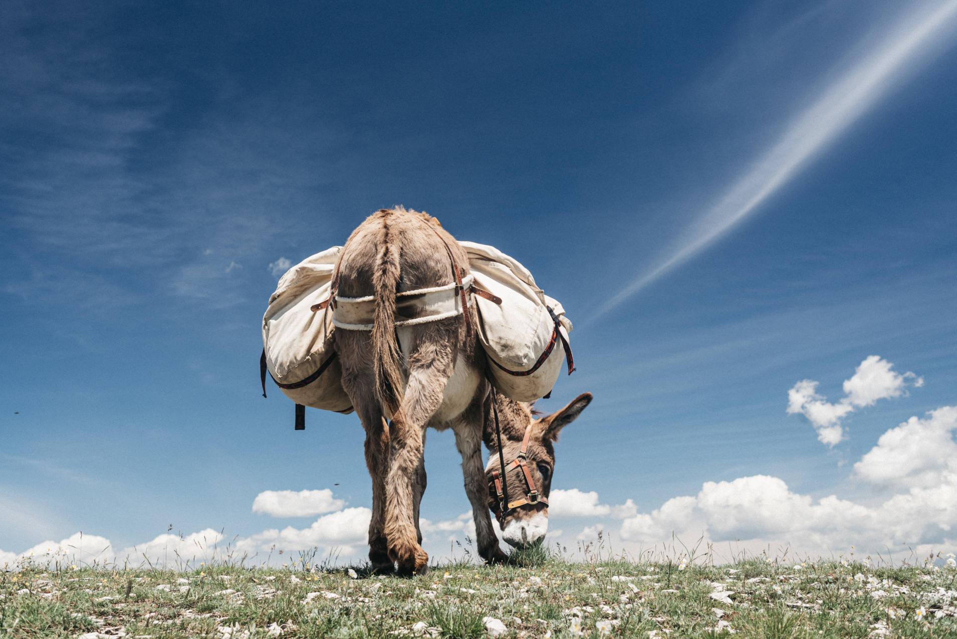 un âne de bât en balade dans la Drôme - photo Maité Baldi